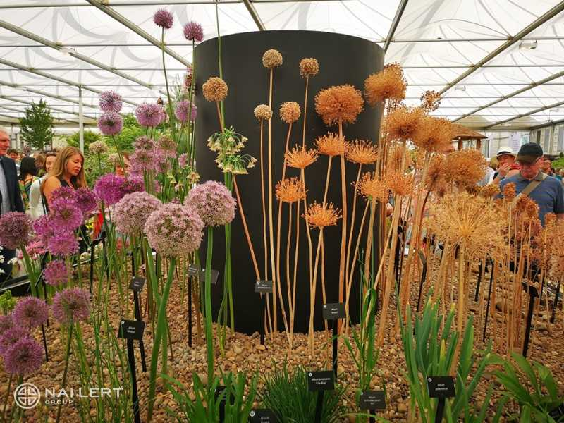 Chelsea Flower​ Show​ 2019 Trip for Competition Winners #5